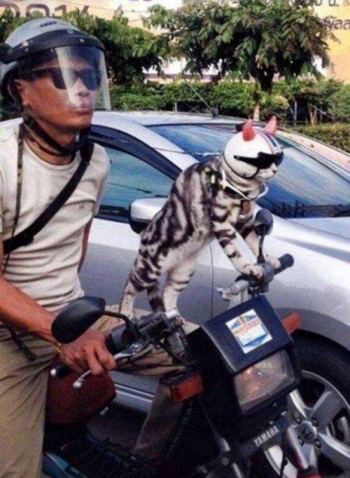 Красивые котики. Картинки про животных