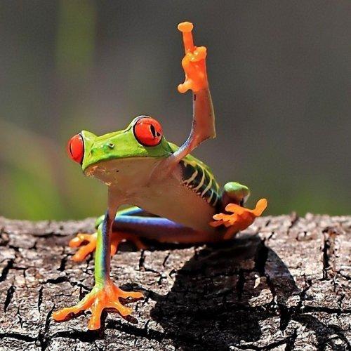 Забавные фотографии лягушек