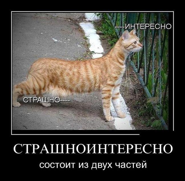 http://xaxa-net.ru/uploads/posts/2015-08/1439533341_7-smeshnye-demotivatory_xaxa-net.ru.jpg
