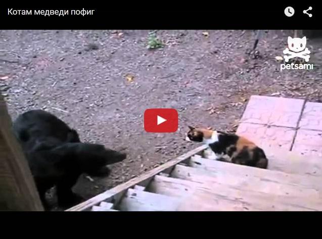 Кот пугает медведя