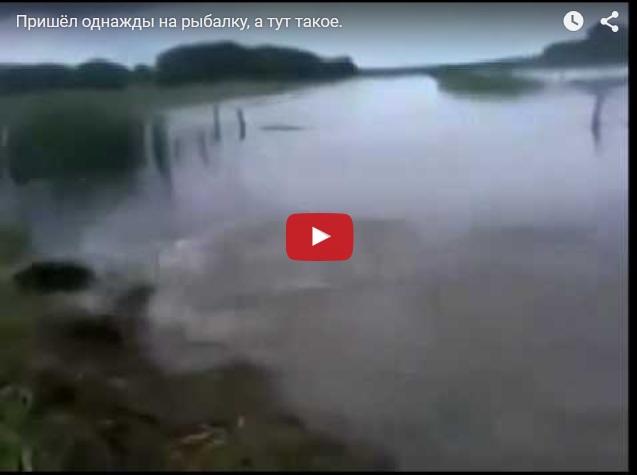 Рыбацкие приколы. Сумасшедшие рыбы, выпрыгивающие на берег