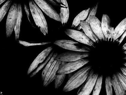 Красивые чёрно-белые картинки