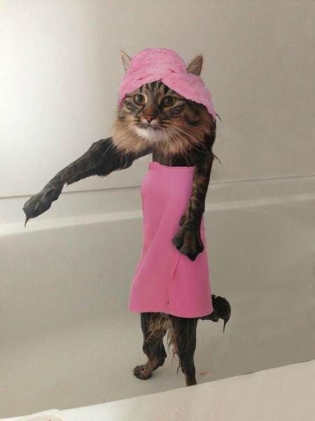 Фотожабы на мокрого кота