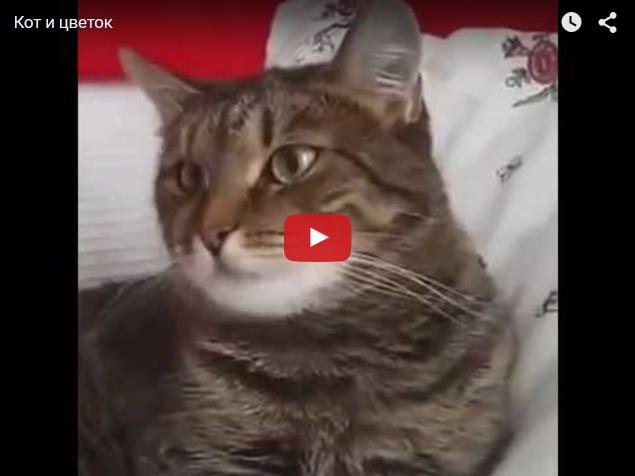 Поздравление странного кота