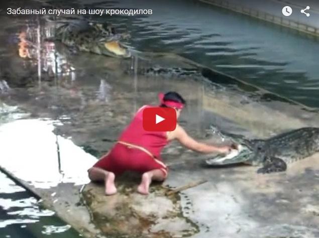 Непредвиденный случай на шоу крокодилов