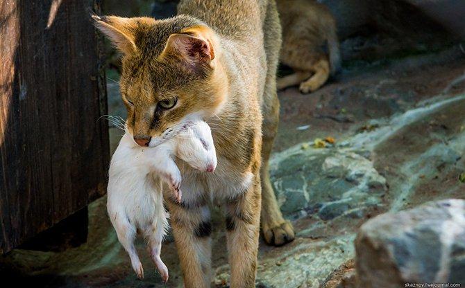 Красивые животные в Белградском зоопарке
