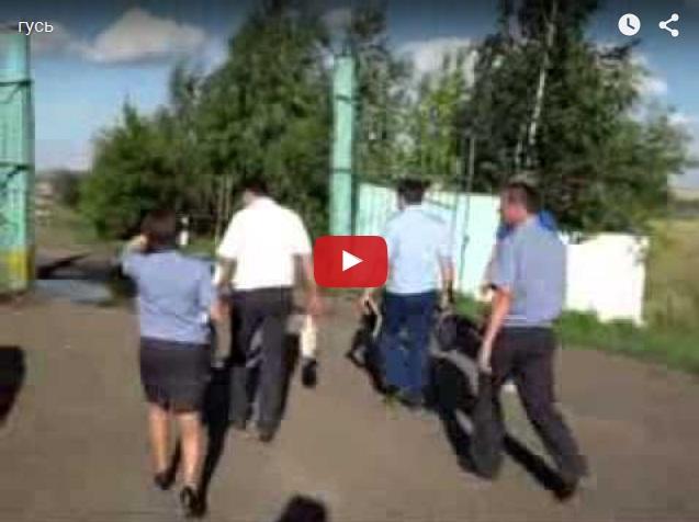 Три веселых гуся попали под санкции. Показательное уничтожение в Татарстане