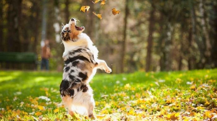 Осень в красочных фотографиях. Красивые картинки