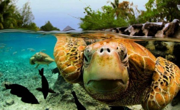Райский остров Бора-Бора. Путешествия по миру