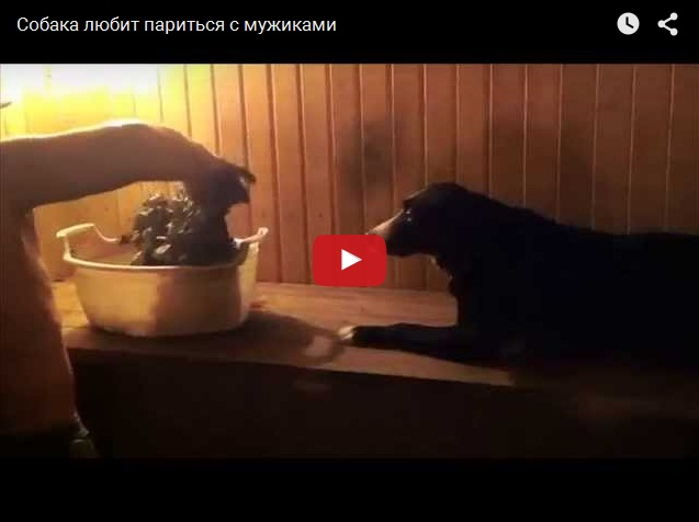 Как попарить собаку в бане?