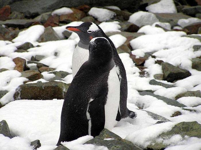 Удивительные красоты Антарктиды