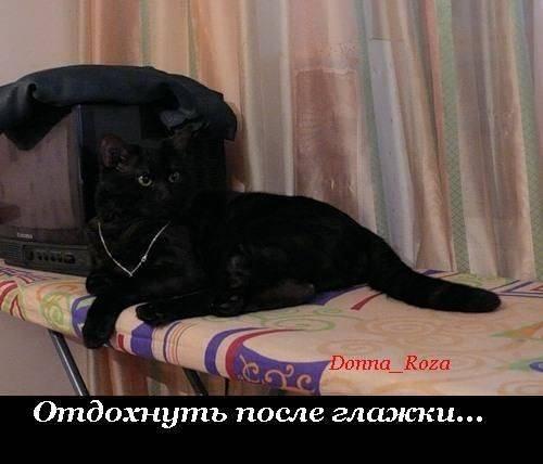 Домашние заботы котов. Хозяйственные зверята