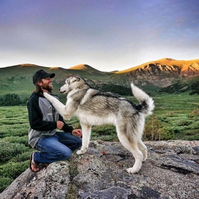 Человек и собака путешествуют вместе