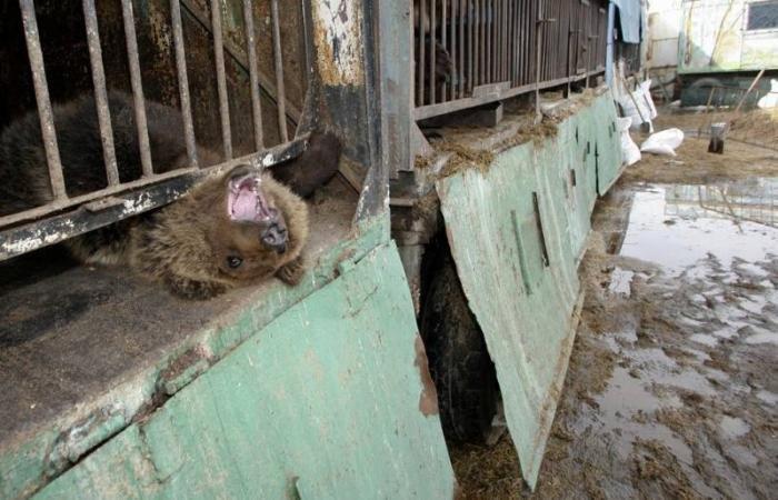Смешные зверятки. Прикольные картинки про животных