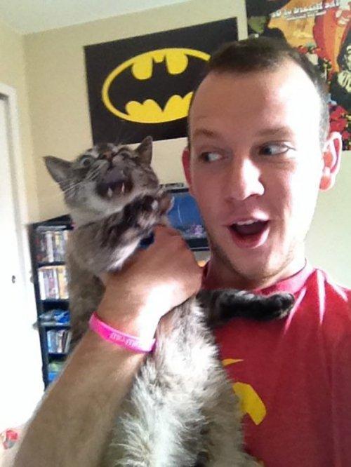 Не фотогеничные кошки. Смешные животные