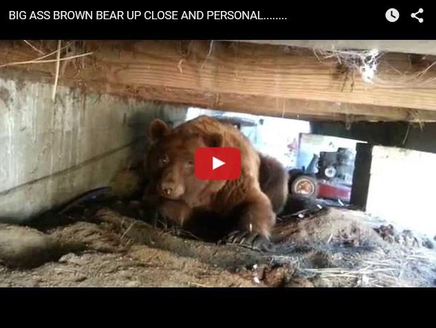Как убегает гордый медведь