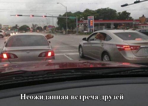 Свежие автоприкольные картинки. Убойные фотки про авто