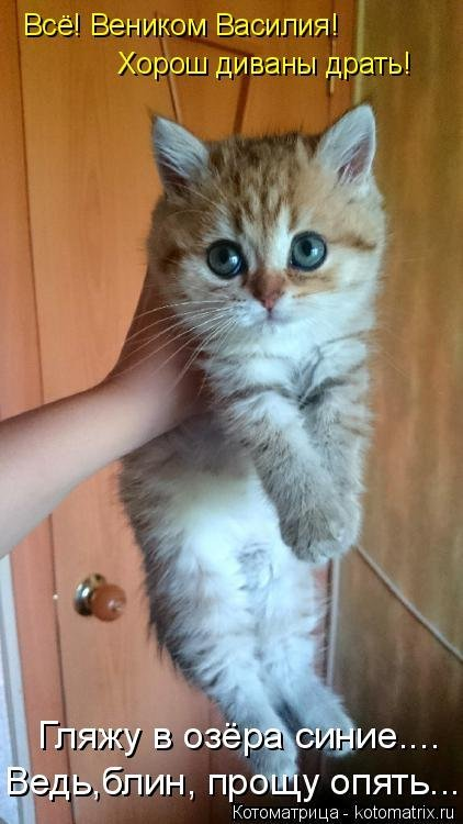 Изображение смешных котов