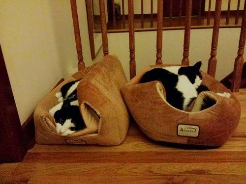 Непостижимая кошачья логика. Смешные коты