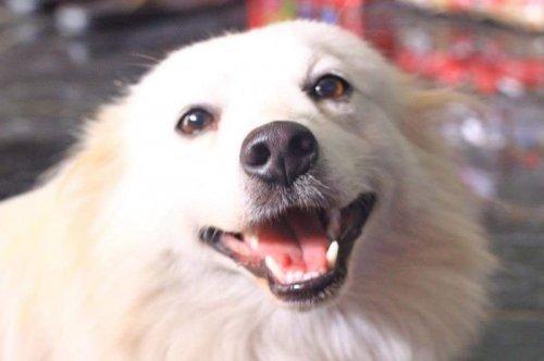 Собачья радость на фото. Прикольные собаки
