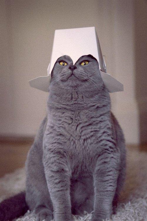 крутые коты картинки