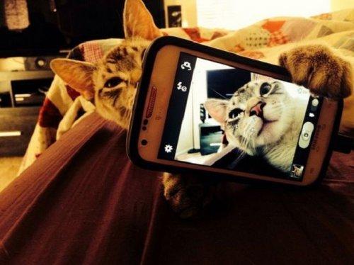 Крутые коты. Весёлые фотографии котиков