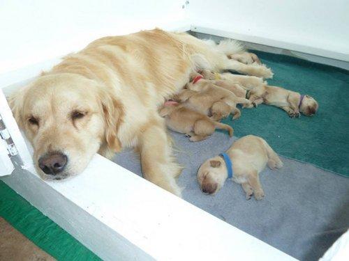 Собаки и их щенки. Прикольные фото