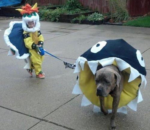 Костюмы для собак на Хеллоуин. Прикольные собаки