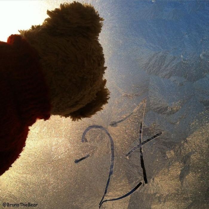Путешествия медвежонка Бруно. Прикольная подборка