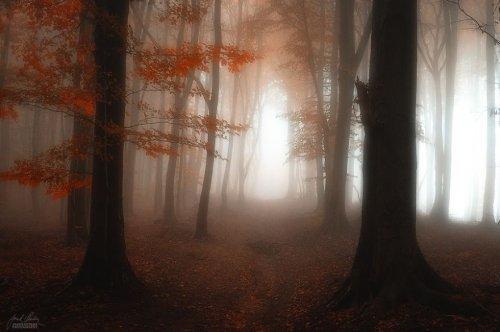 Красивые фото осеннего леса. Удивительные пейзажи