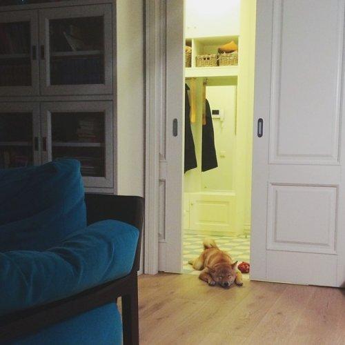 Прикольный пёс Барни. Собака-улыбака