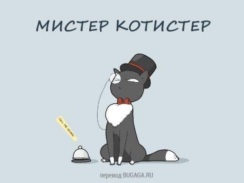 Разновидности котов. А какой кот твой?