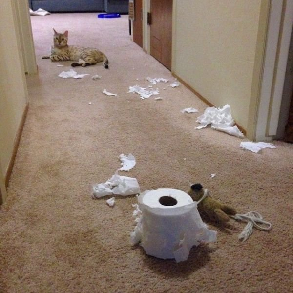 Пакостные кошки и собаки. Фото смешных животных