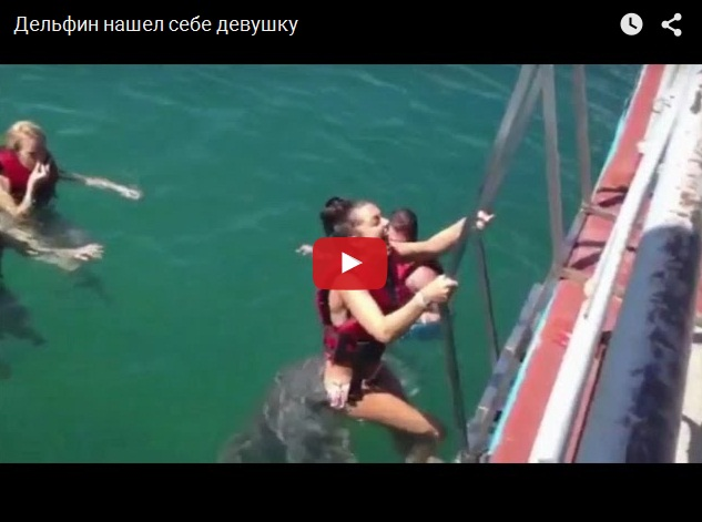 Дельфин пристает к девушке