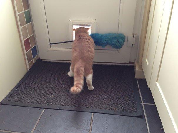 Прикольные фотографии с кошками