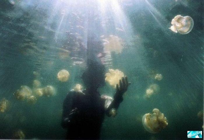 Красивое озеро с медузами. Восхитительные фото