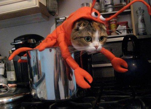 Возмущённые кошки. Приколы про котов