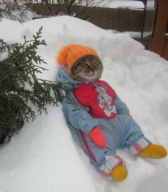 К зиме готов! Прикольные фото животных