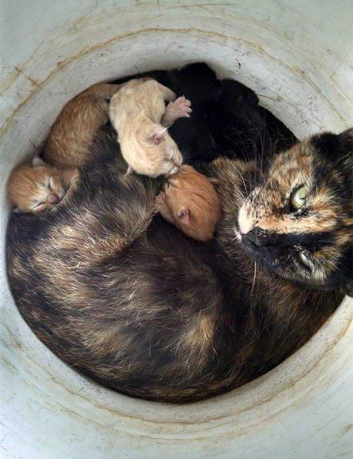 Кошки со своими котятами
