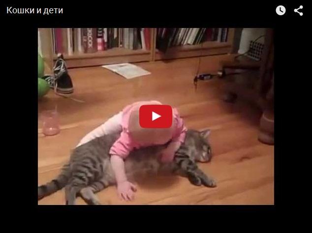 Смешное видео про кошек и детей