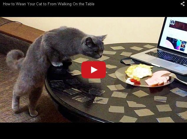 Что делать, чтобы кот не залезал на стол
