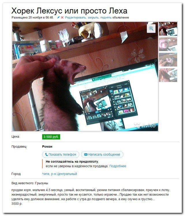 Приколы из социальных сетей. Картинки с надписями
