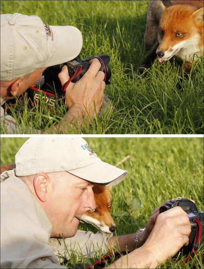 Прикольные фотки животных и фотографов