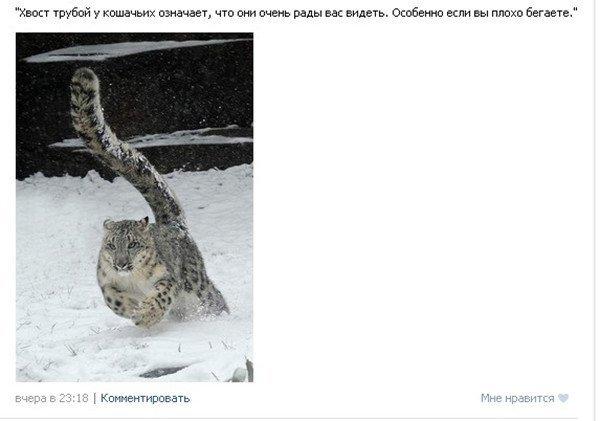 Забавные скриншоты из социальных сетей. Свежие приколы