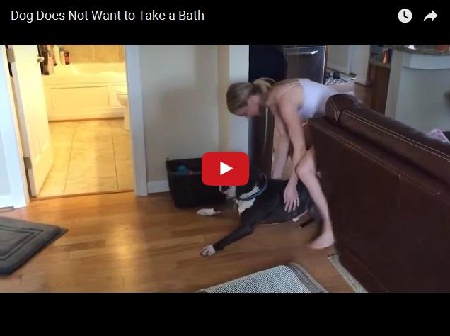 Собака не хочет мыться