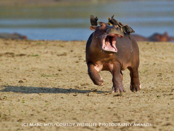 Прикольные фотографии животных. Весёлая фауна