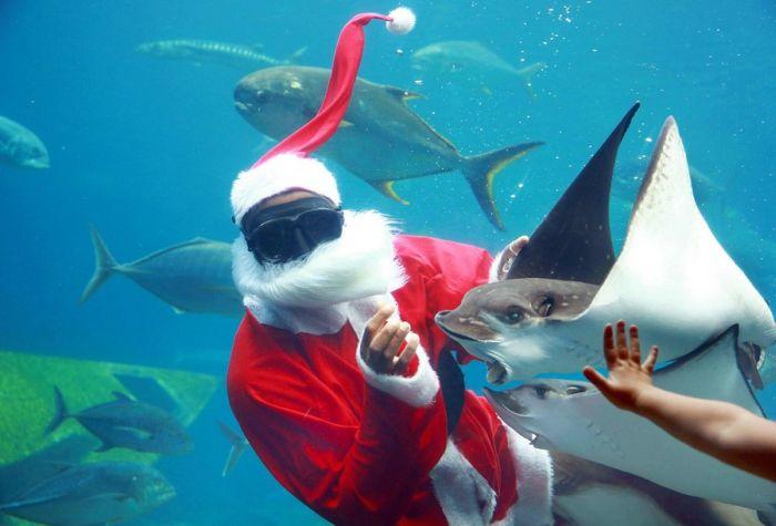 Свежая подборка декабрьских прикольных картинок