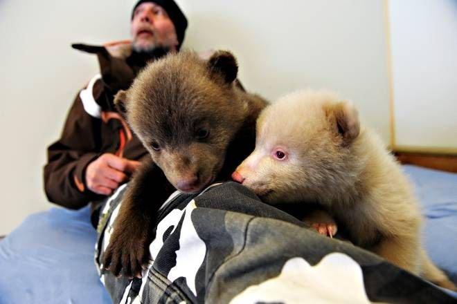 Красивые фотографии медведей. Лучшая подборка