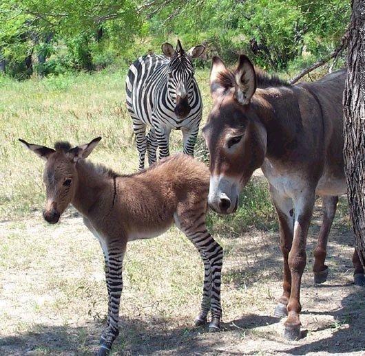 Очень странные животные. Смешные фото