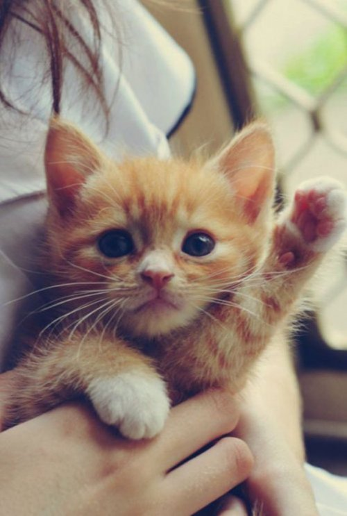 Весёлые картинки про кошек. Смешная подборка